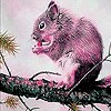 Pink Hungry Squirrel Slide Puzzle Game Online