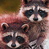 Raccoon Brothers Puzzle Game Online